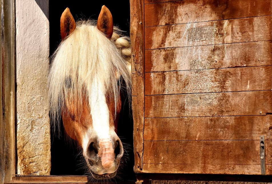 Pferdeanhänger von trailer-point.de